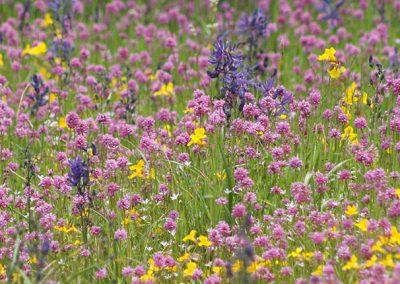 Harewood Plains Meadow